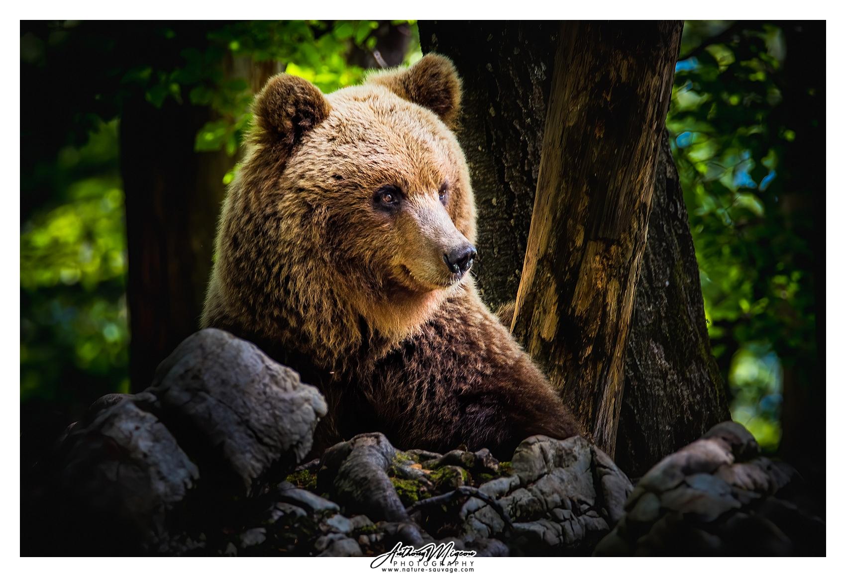 visit brown bear gallery
